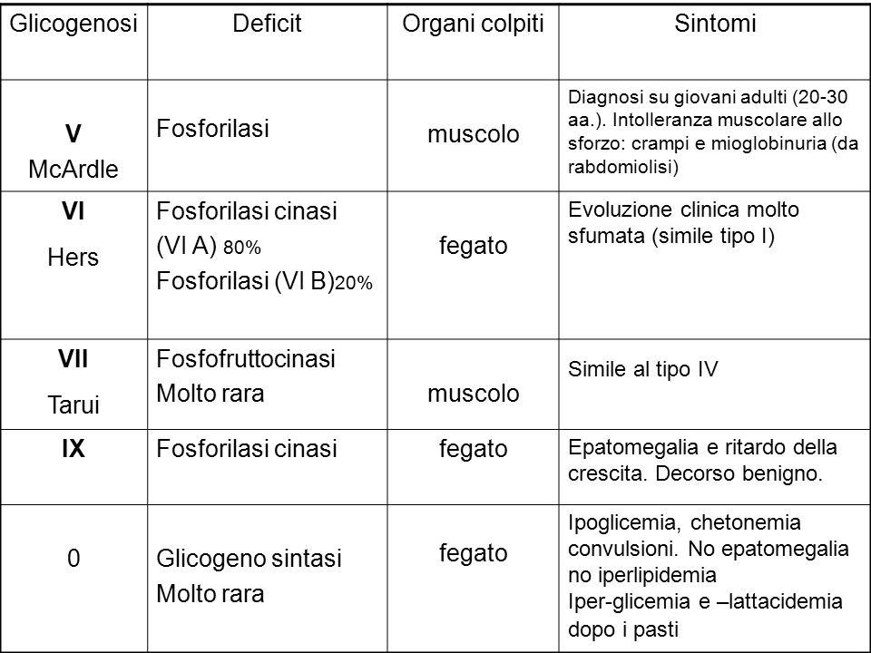 Glicogenosi Deficit Organi colpiti Sintomi V McArdle Fosforilasi