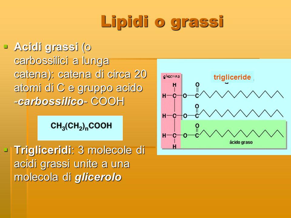 Lipidi o grassi Acidi grassi (o carbossilici a lunga catena): catena di circa 20 atomi di C e gruppo acido -carbossilico- COOH.