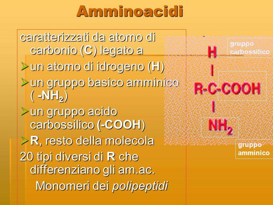 Monomeri dei polipeptidi