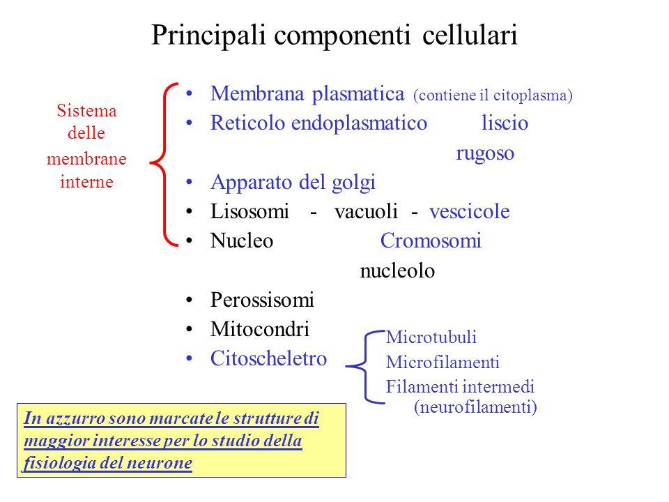 Principali componenti cellulari
