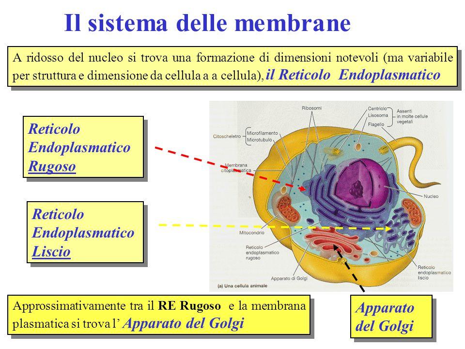 Il sistema delle membrane