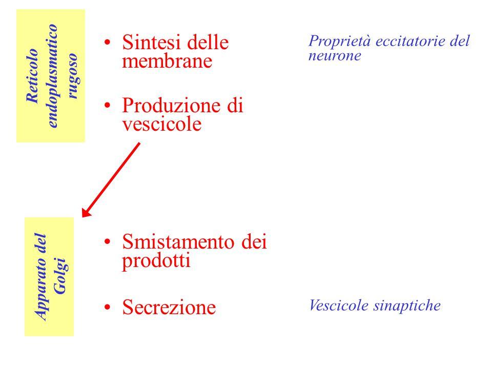 Reticolo endoplasmatico rugoso