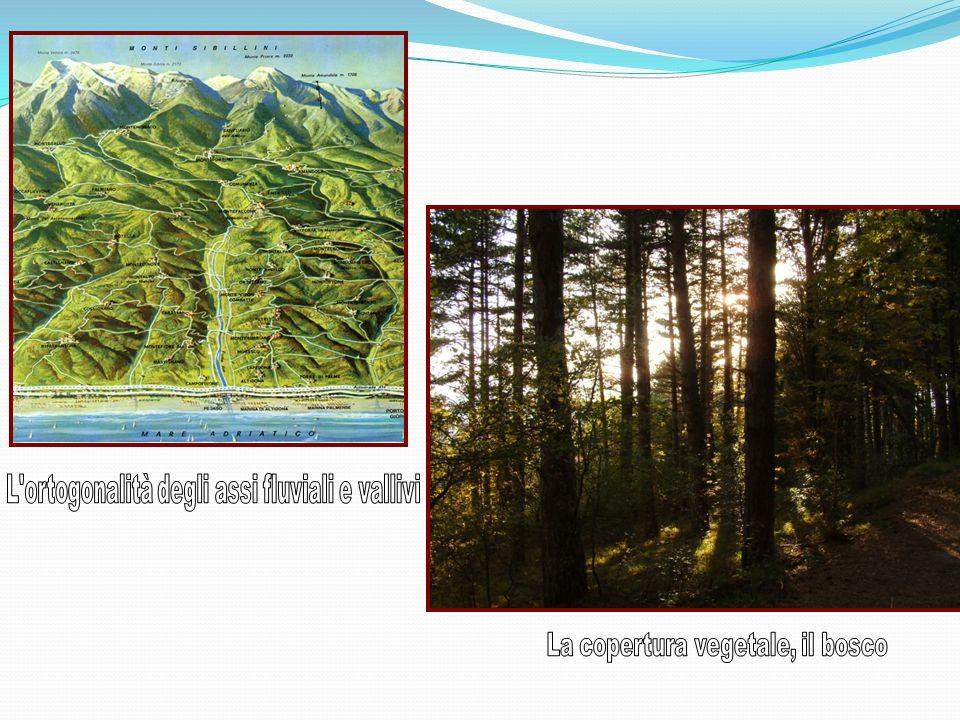 L ortogonalità degli assi fluviali e vallivi