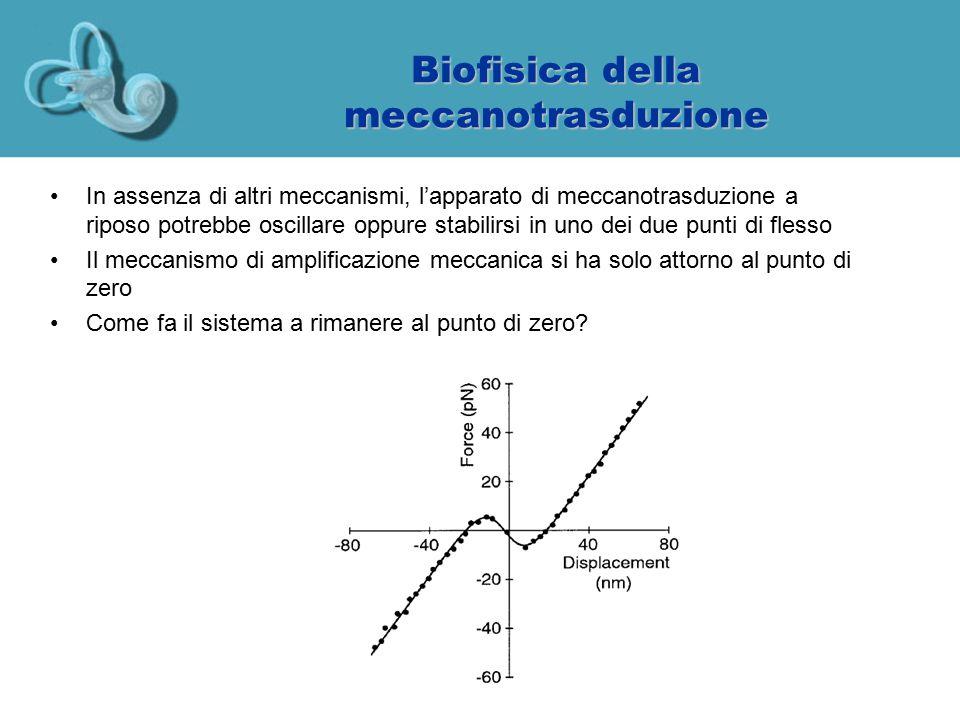 Biofisica della meccanotrasduzione