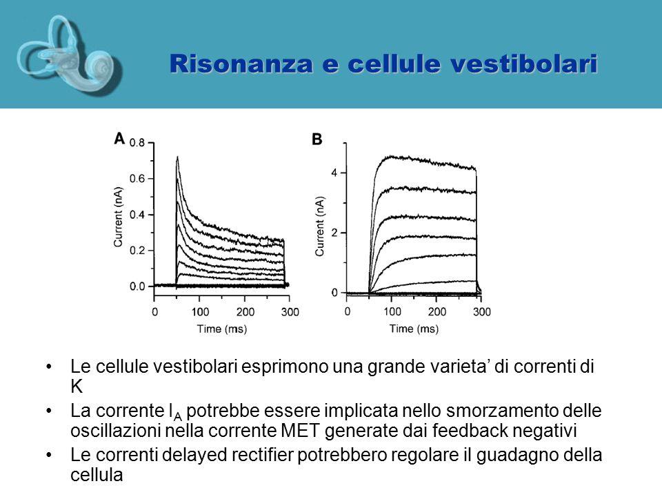 Risonanza e cellule vestibolari