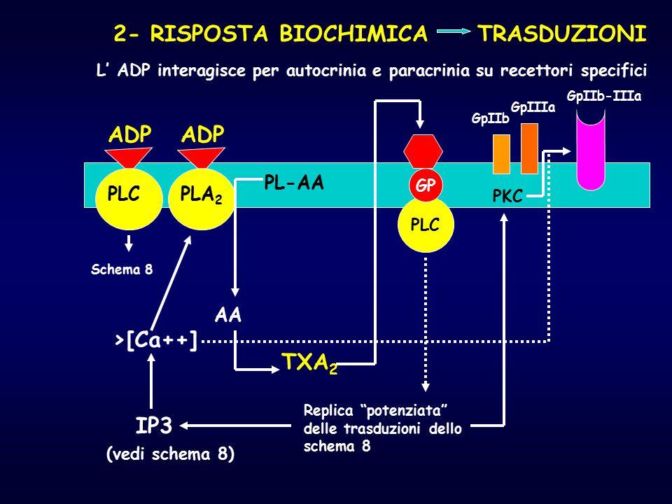 2- RISPOSTA BIOCHIMICA TRASDUZIONI