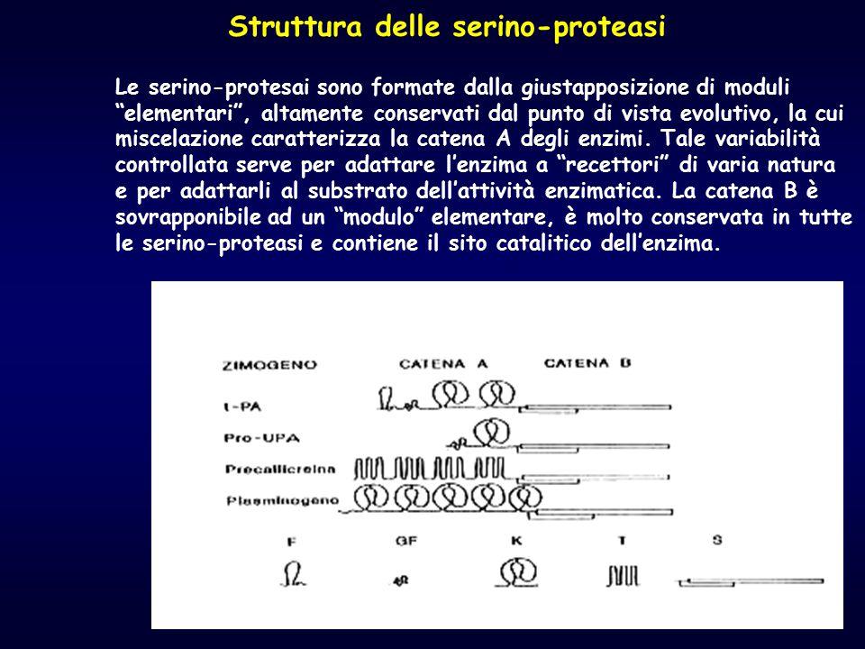Struttura delle serino-proteasi