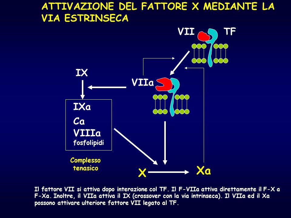 Xa X ATTIVAZIONE DEL FATTORE X MEDIANTE LA VIA ESTRINSECA VII TF IX