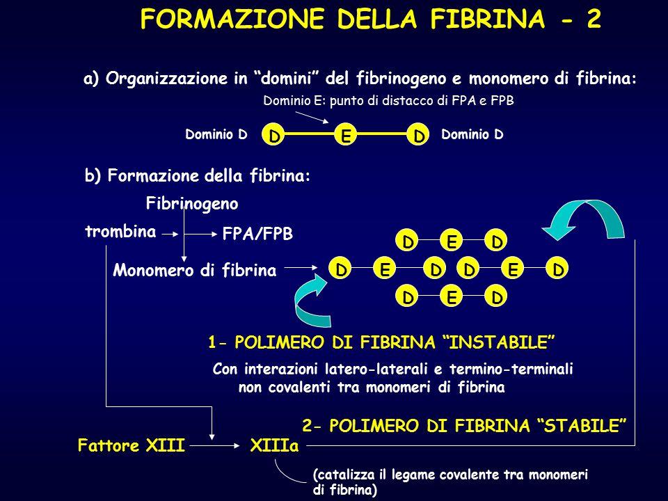 FORMAZIONE DELLA FIBRINA - 2