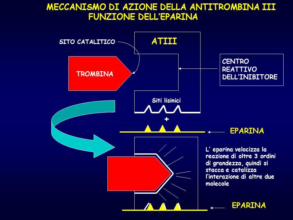 + MECCANISMO DI AZIONE DELLA ANTITROMBINA III FUNZIONE DELL'EPARINA