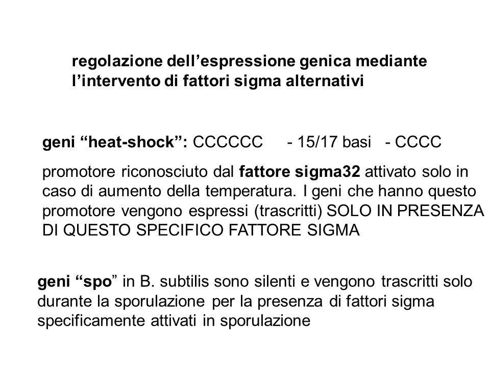 regolazione dell'espressione genica mediante l'intervento di fattori sigma alternativi