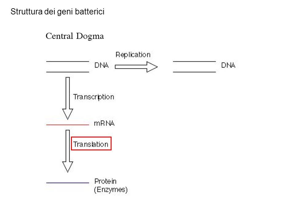 Struttura dei geni batterici