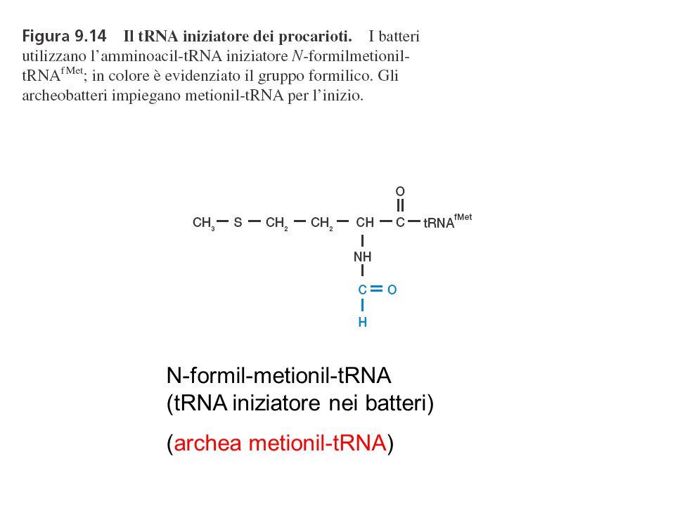 N-formil-metionil-tRNA (tRNA iniziatore nei batteri)