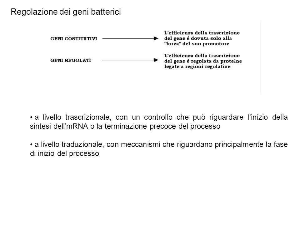 Regolazione dei geni batterici