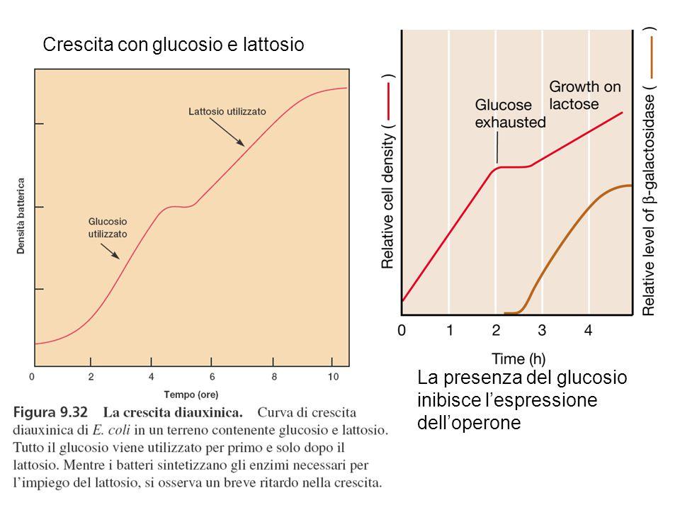 Crescita con glucosio e lattosio