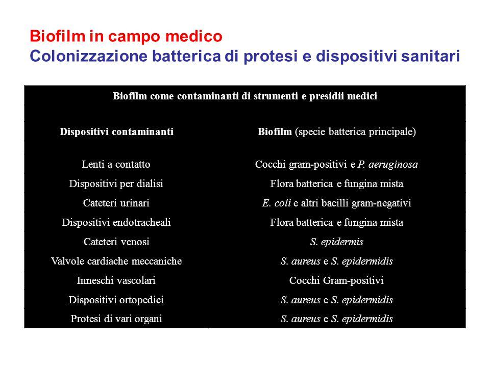 Biofilm in campo medico Colonizzazione batterica di protesi e dispositivi sanitari
