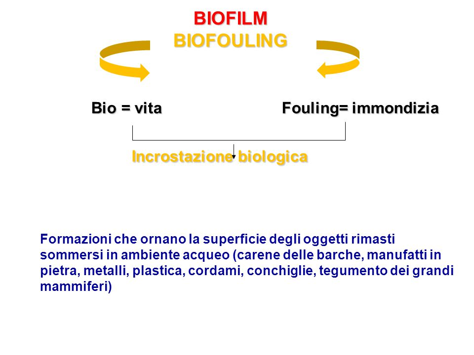 BIOFILM BIOFOULING Bio = vita