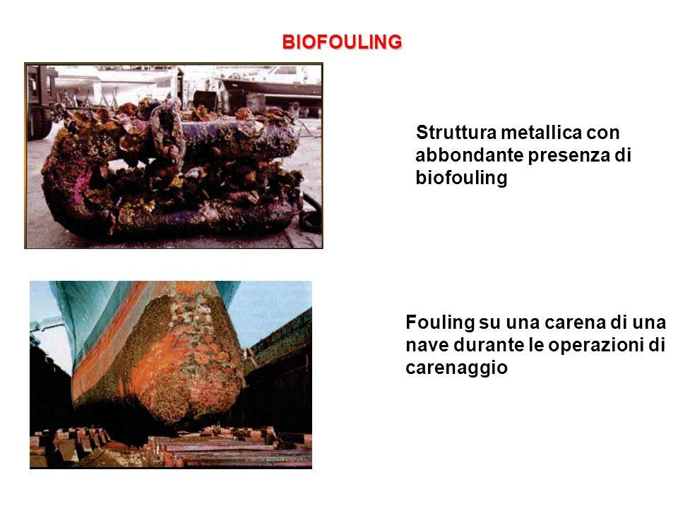BIOFOULING Struttura metallica con abbondante presenza di biofouling