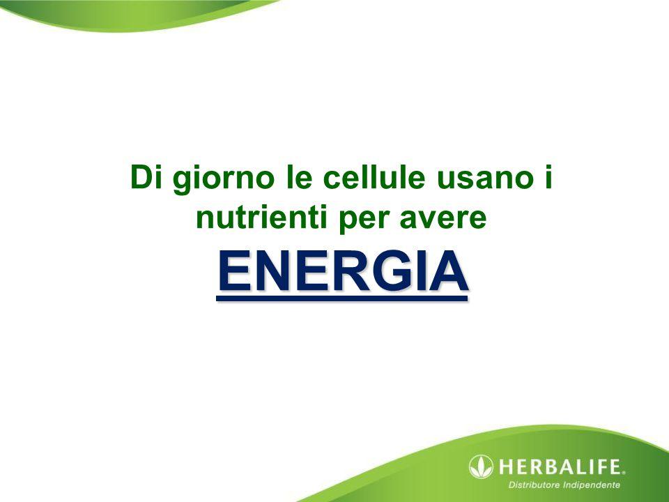 Di giorno le cellule usano i nutrienti per avere ENERGIA