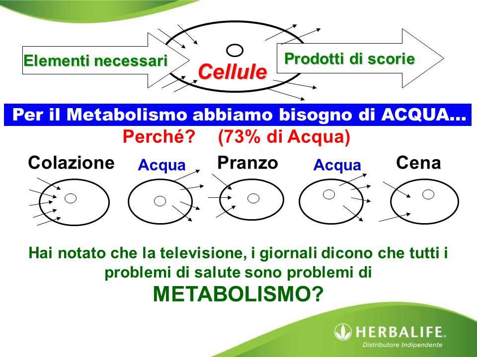 Cellule METABOLISMO Perché (73% di Acqua) Cena Pranzo