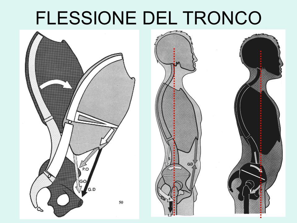 FLESSIONE DEL TRONCO