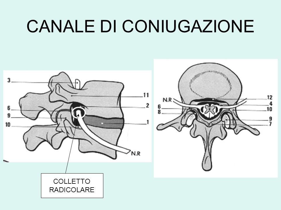 CANALE DI CONIUGAZIONE