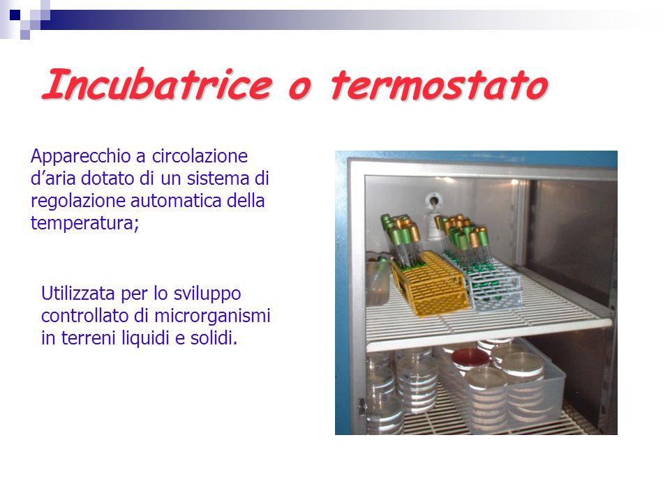 Incubatrice o termostato