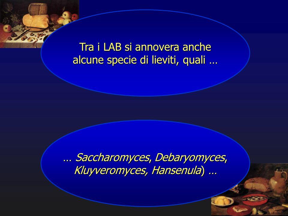 Tra i LAB si annovera anche alcune specie di lieviti, quali …