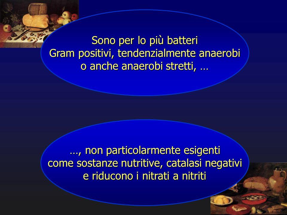 Gram positivi, tendenzialmente anaerobi o anche anaerobi stretti, …
