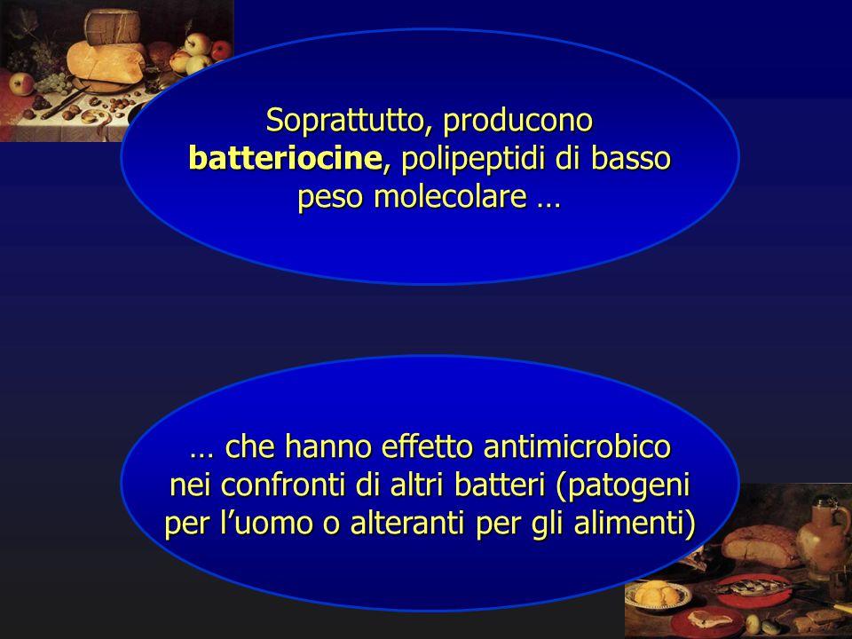 Soprattutto, producono batteriocine, polipeptidi di basso