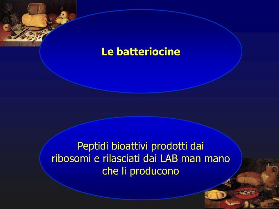 Peptidi bioattivi prodotti dai ribosomi e rilasciati dai LAB man mano