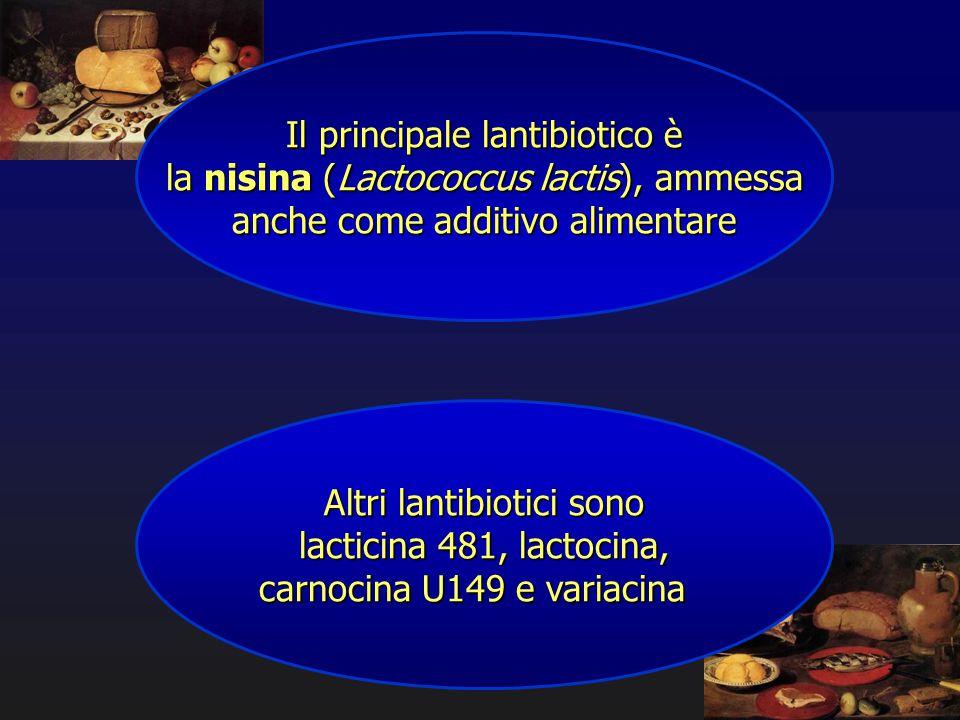 Il principale lantibiotico è la nisina (Lactococcus lactis), ammessa