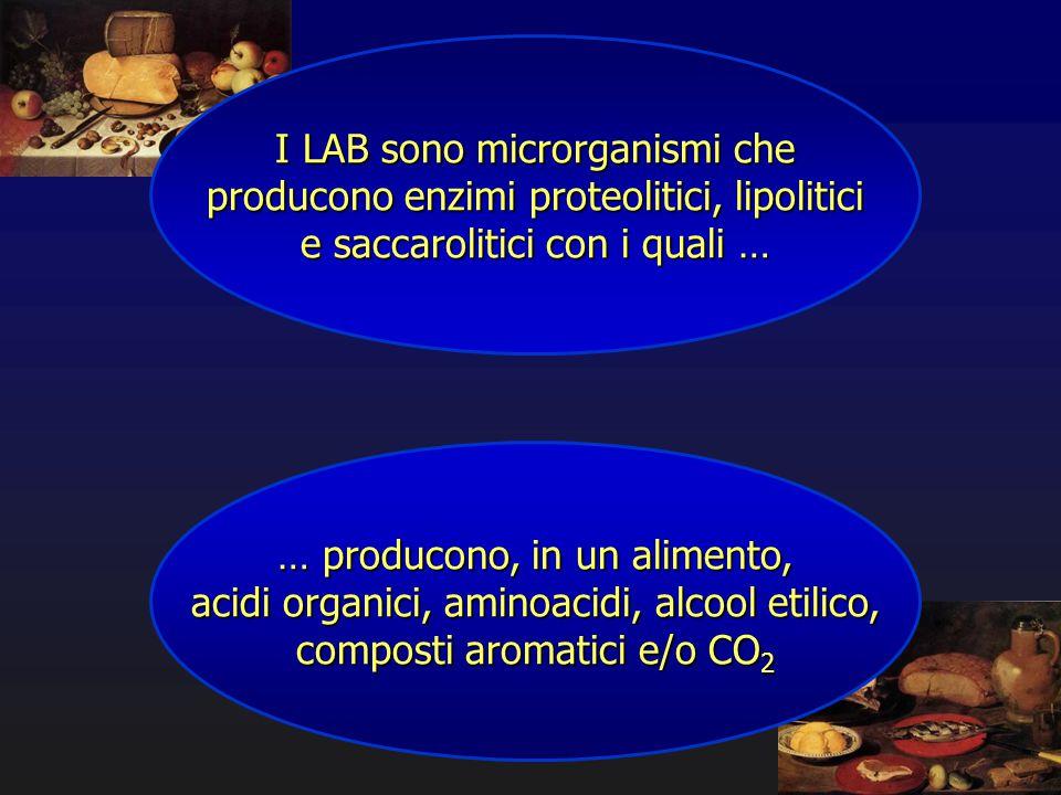 I LAB sono microrganismi che producono enzimi proteolitici, lipolitici