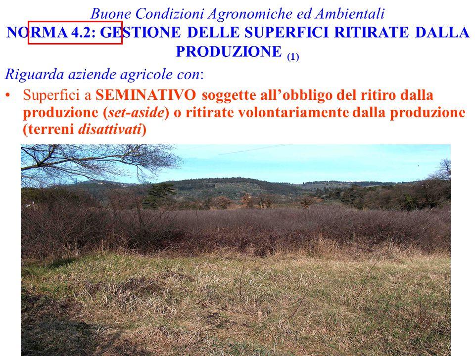 Buone Condizioni Agronomiche ed Ambientali NORMA 4