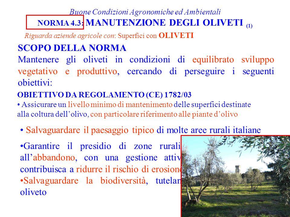 Salvaguardare il paesaggio tipico di molte aree rurali italiane
