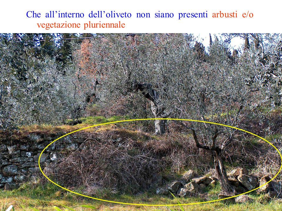 Che all'interno dell'oliveto non siano presenti arbusti e/o vegetazione pluriennale
