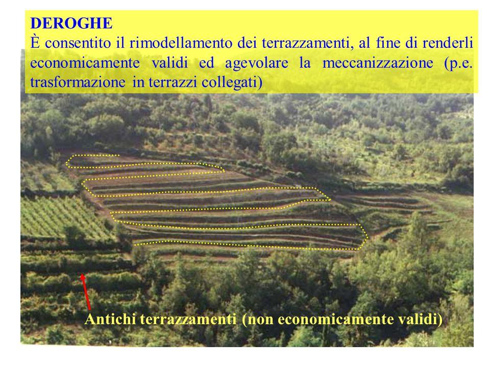 Antichi terrazzamenti (non economicamente validi)