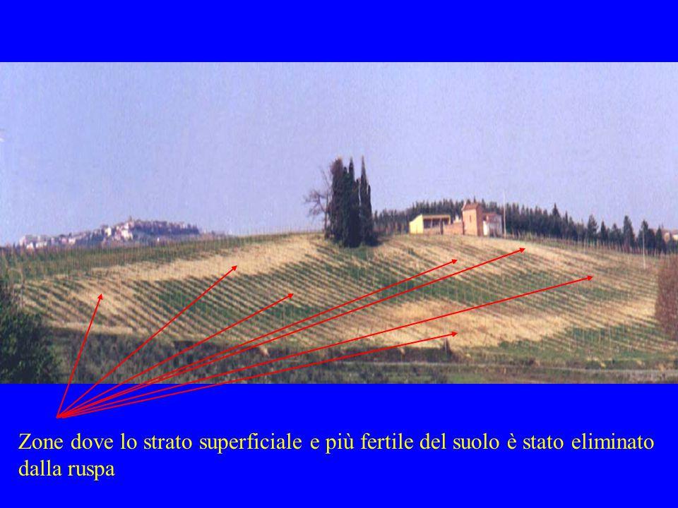 Zone dove lo strato superficiale e più fertile del suolo è stato eliminato dalla ruspa