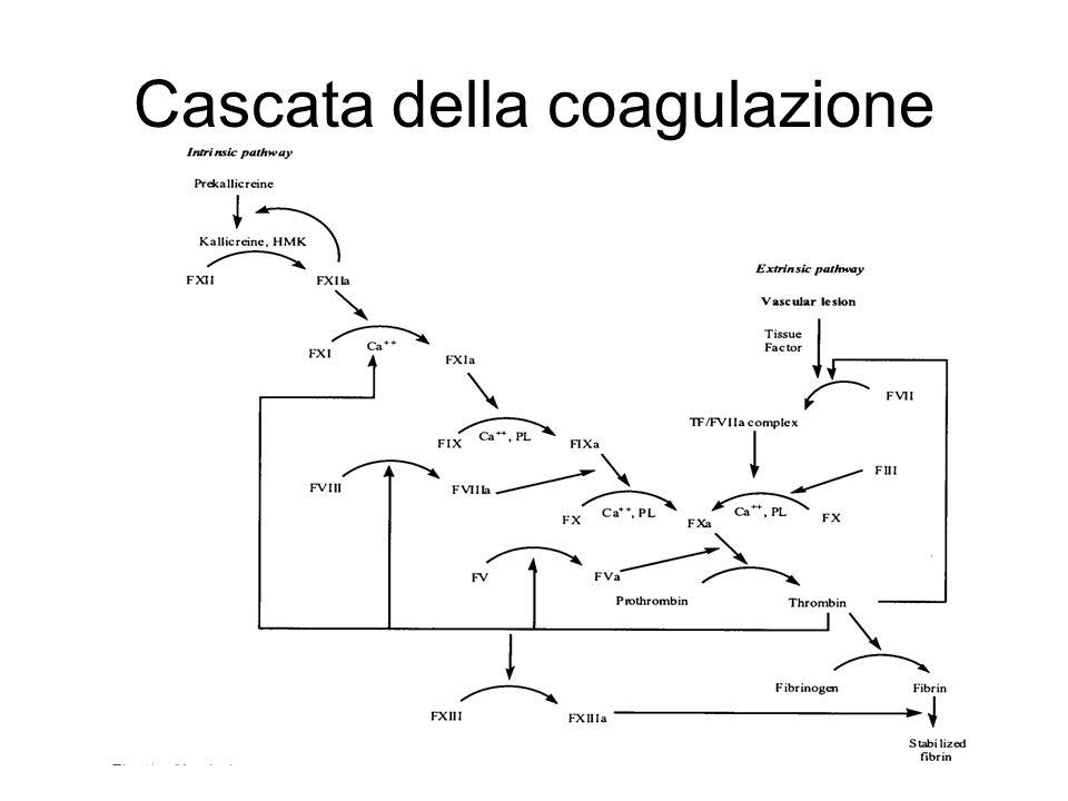 Cascata della coagulazione
