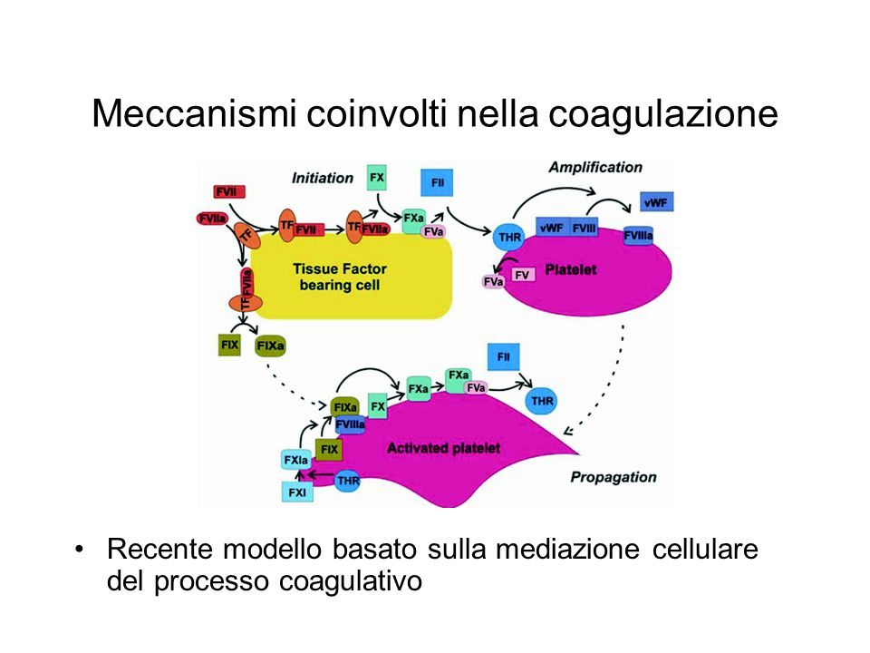 Meccanismi coinvolti nella coagulazione