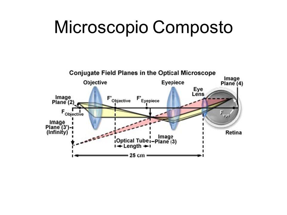 Microscopio Composto