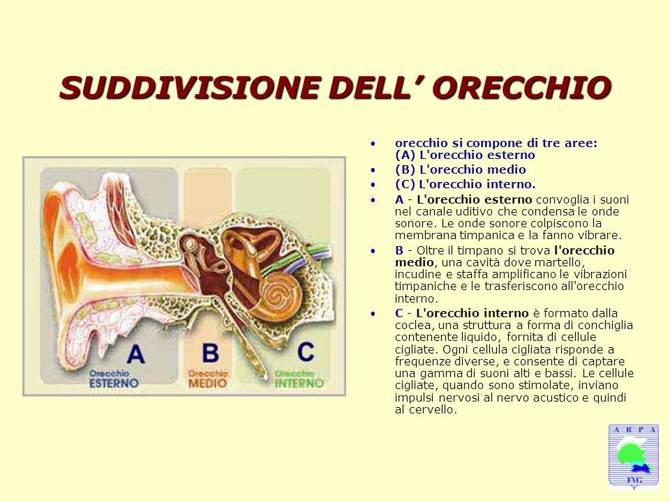 SUDDIVISIONE DELL' ORECCHIO