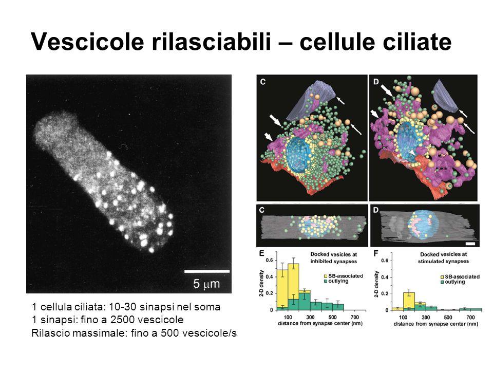 Vescicole rilasciabili – cellule ciliate