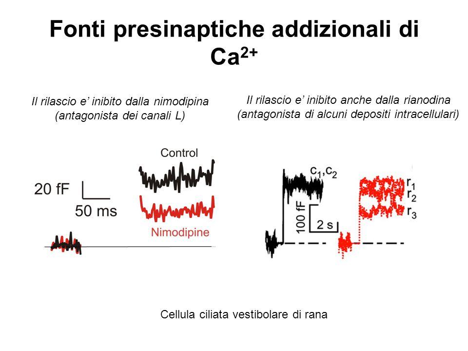 Fonti presinaptiche addizionali di Ca2+