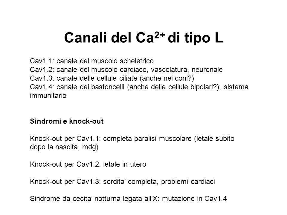 Canali del Ca2+ di tipo L Cav1.1: canale del muscolo scheletrico