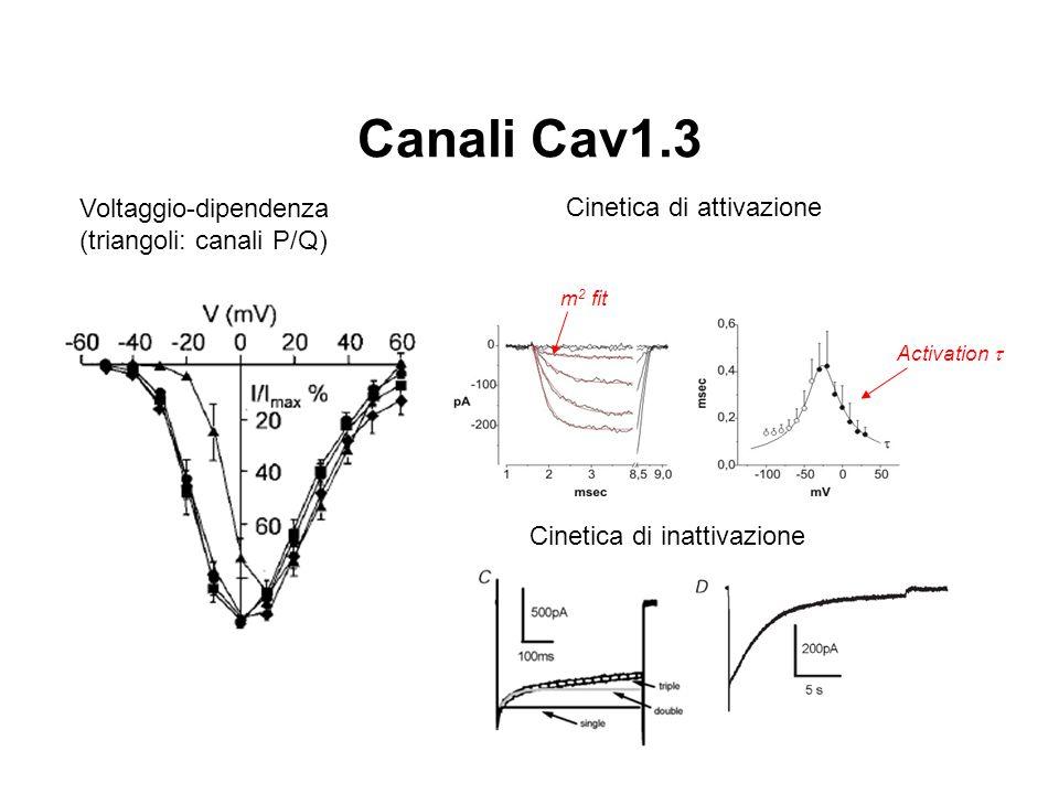 Canali Cav1.3 Voltaggio-dipendenza (triangoli: canali P/Q)