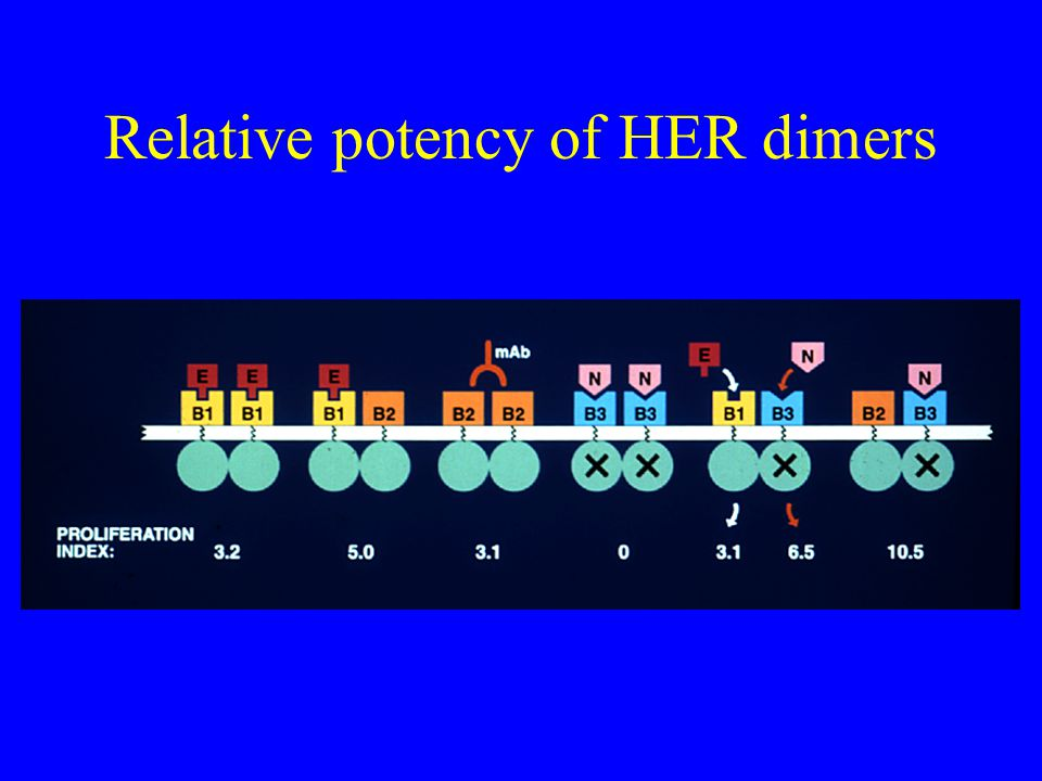 Relative potency of HER dimers