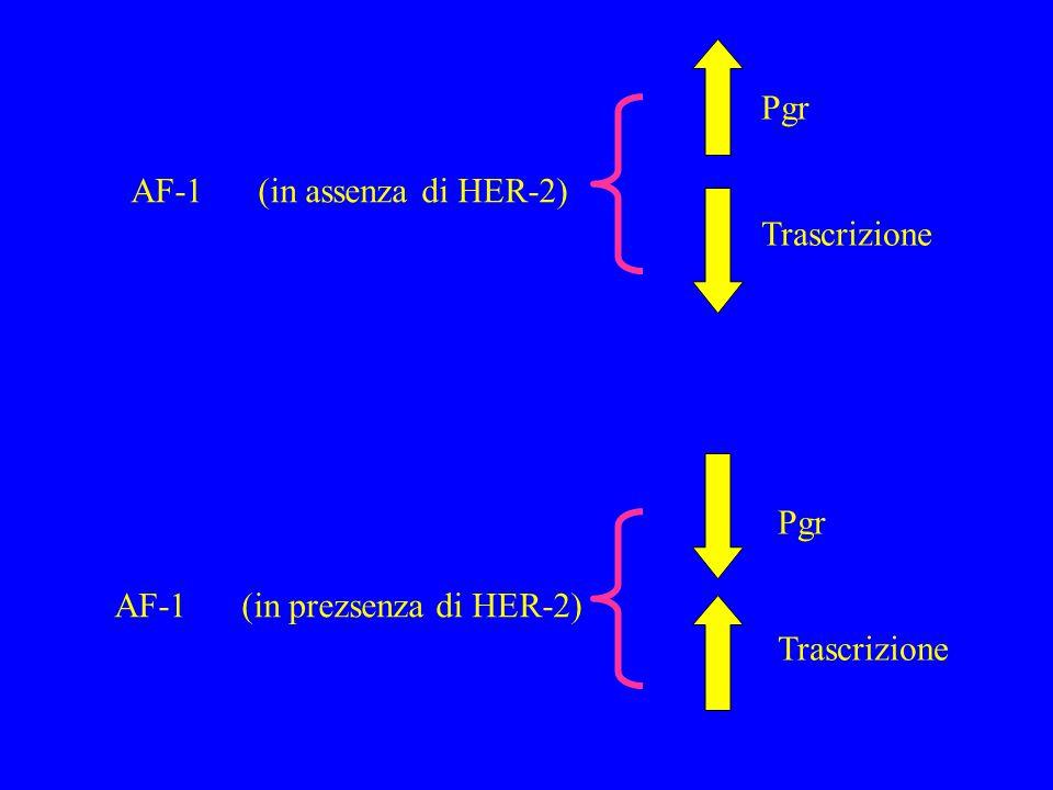 Pgr Trascrizione AF-1 (in assenza di HER-2) Pgr Trascrizione AF-1 (in prezsenza di HER-2)