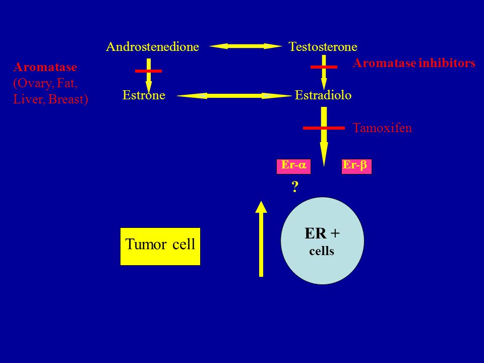 ER + Tumor cell Androstenedione Testosterone Aromatase inhibitors