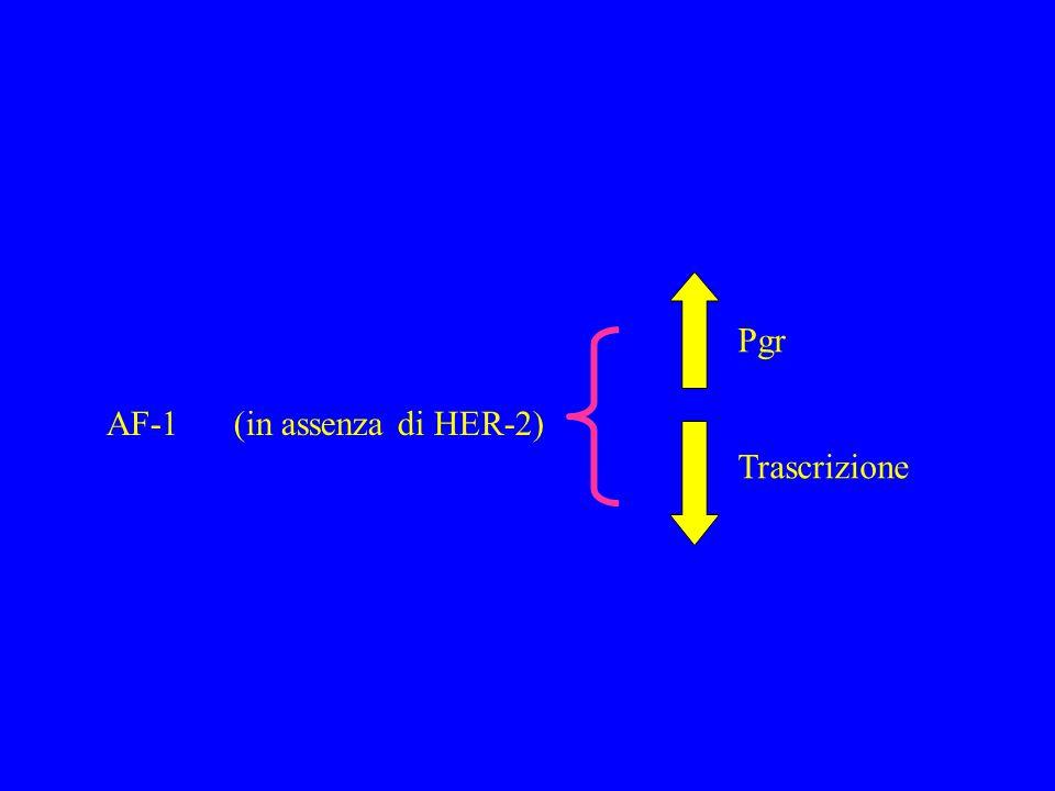 Pgr Trascrizione AF-1 (in assenza di HER-2)